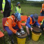 Sieving for artefacts